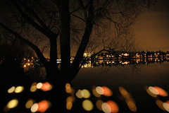 Seattle Greenlake tree and reflection