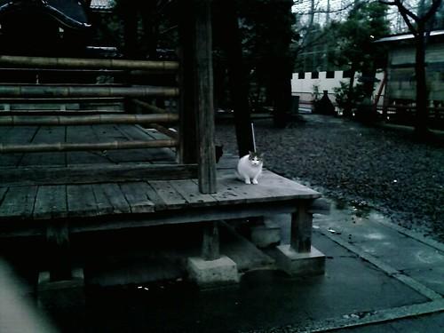 X01HT 猫写デビュー