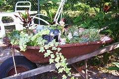 Gnome Garden (turtlepatrol) Tags: yard garden gnome wheelbarrow gardenstatuary