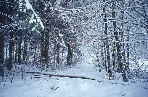 winter-picture_forest-
