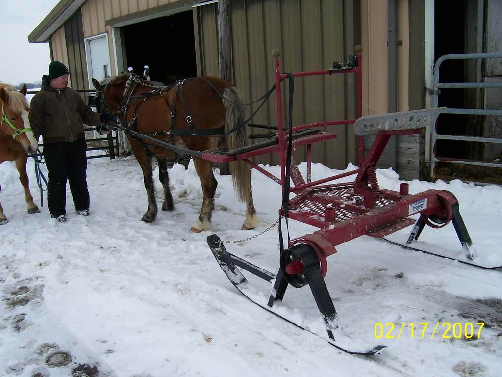 Draft horse village view topic more haflingers in the snow in