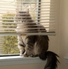 (OringeJellow) Tags: cat feline tabby jimmy gray kitty katz 2007 cc100 impressedbeauty tunafished