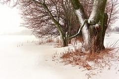 Winter field - by James Jordan