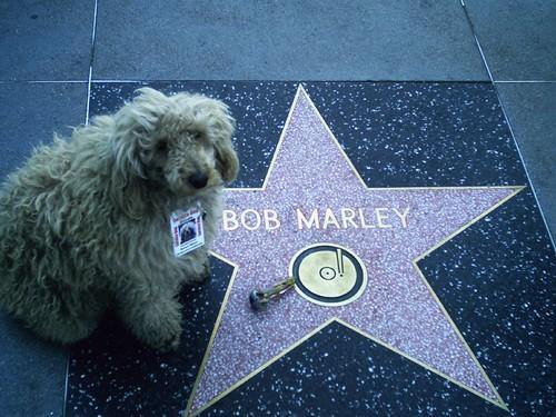 Fotografía: Hollywood Poodle