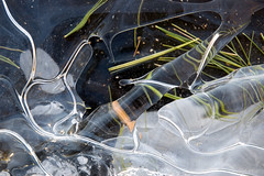 Debris Under Clear Ice (roddh) Tags: white abstract ice pine interesting nikon raw debris d70s refraction layers acr needles roddh