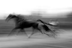 Harnass racing training - by Jan-Willem Swane