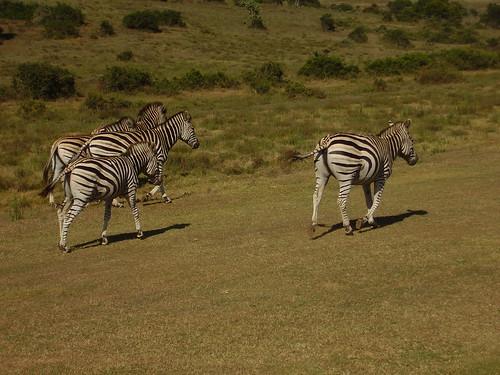Sydafrika 2007 167