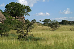 Kopjes (Serengeti) (imanh) Tags: africa nature landscape tanzania natuur afrika serengeti landschap iman kopjes heijboer imanh