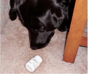 寵物藥物中毒