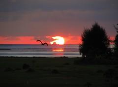 Sunset 18/03/2007 (╚ DD╔) Tags: trees sunset sea sun water colors grass bat maldives gan addu superbmasterpiece beyondexcellence