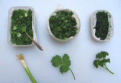 Freezing herbs for quick cooking