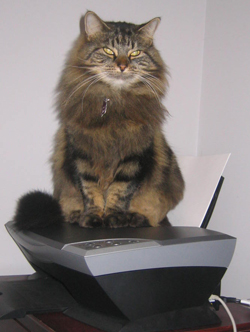 Cat on Printer