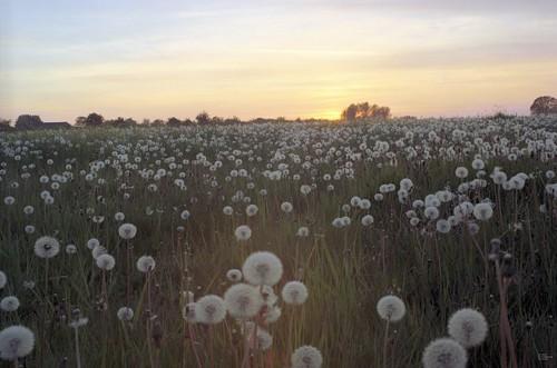 Thêm một chút cho hoa Bồ Công Anh - By Boong Boong - Yahoo 360! 430193045_4f5b87a4b6