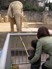 ワニに襲われる象