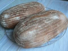 Caracho - Brot mit Maismehl und Kartoffel 001