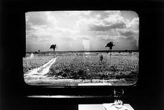 Last train - Window on Veracruz (mexadrian) Tags: trees window train mexico tren palm veracruz