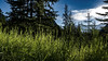Banff National Park - Alberta, Canada (Charles Davis Smith - AIA   Photographer) Tags: banffnationalparkalberta canada nationalparkscanada canadianrockymountains fineartphotography dallastexasarchitecturalphotographers charlesdavissmithphotographer charlesdavissmithaiaphotographer chucksmith dallasarchitecturalphotographers texasphotographers texasarchitecturalphotographer texasarchitecturalphotography alberta