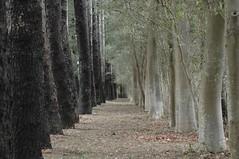 Trees - macro ケヤキ trees