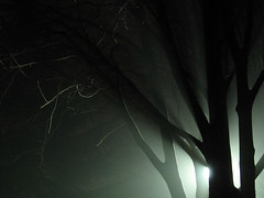 scary fog (Nicola Zuliani) Tags: fog night scary nicola horror nebbia notte paura nizu zuliani preganziol nicolazuliani nizuit nnart nnart654 wwwnizuit