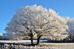 The love makes beautiful. frosted landscape for christmas xmas and happy new year pour nol et le nouvel an (* Thierry *) Tags: christmas new xmas blue trees winter sky white france landscape happy interestingness frost framed postcard topv1111 year bluesky noel an invierno postal hermoso nol bonne topf100 bourgogne campagne happynewyear 2007 nouvelan nouvel calidad winterlandscape anne mostviewed whitetree whitetrees frostedtrees interestingness7 bonneanne whitelandscape arbregel plusvu campagneenhiver arbreblanc rbol