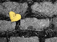 a lost heart by *brilho-de-conta, on Flickr