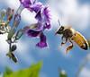 A nice bee.