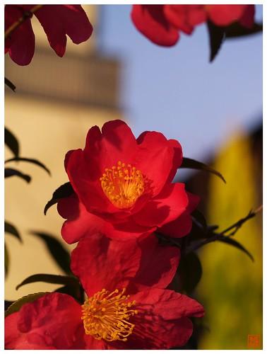 Flower 070108 #02