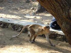Elephanta monkeys2