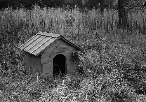 主のいない犬小屋