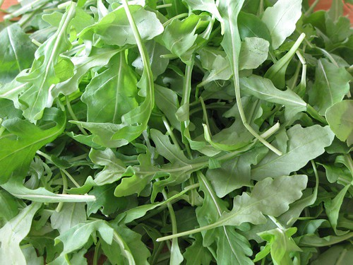 What is arugula?