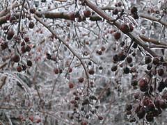 Ice Storm 2007 - 4