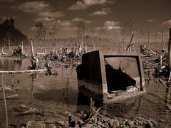 Swamp TV. (James Good) Tags: television tv junk miami 100v10f monitor swamp rubbish dumped aspect43