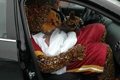 Jinx in a car (shawn.plew) Tags: mascot jinx iupui
