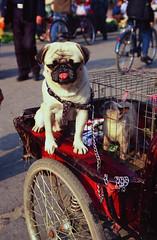 Pets in China (BoazImages) Tags: life china dog pets cute animals heilongjiang topv111 cat friendship cycle heihe