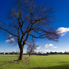 Tree Study (Hart from Golborne) Tags: leica blue sky tree field m8 keepers 2428 golborne asphgolborne