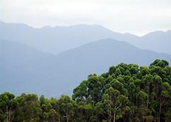 DETRS DEL MAR (317) Tags: verde azul brasil gamboa garopaba celeste vegetacion 317 pasteles montaas mataloni