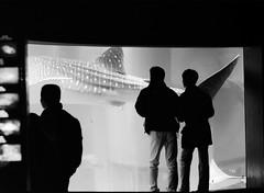shark's tail (manuel cristaldi) Tags: leica travel people blackandwhite bw fish film water japan 35mm japanese aquarium shark blackwhite video noiretblanc tail basin same 日本 whale osaka whaleshark breed viaggi kuro giappone shiro kujira ringoffire sakana fuka views300 shirokuro manuelcristaldi feltlife