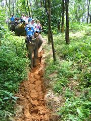 Слоновья тропинка.