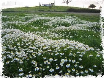 Fotografia original de Afribrasil - http://www.flickr.com/photos/afribrasil/150041470/