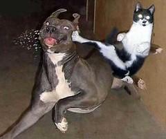 Cat Kicking A Dog