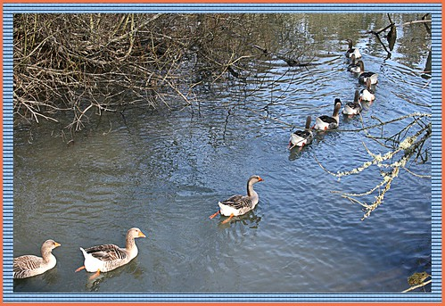 Follow The Leader Up Butternut Creek