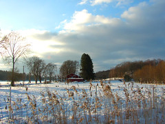 Meadow in snow (Per Ola Wiberg ~ Powi) Tags: trees winter sky snow nature beautiful clouds sweden sverige february sn trd 2007 februari naturescenes moln vass zafiro hiddentreasure eker mywinners abigfave micmarayyo thebeautyofnature anawesomeshot impressedbeauty bryggavgen ekebyhovsalln flickraward mycameraneverlies diamondstars flickrsun shiningstar natureislife magicaltouch thebestshot grupodehablahispana naturesphotos brilliantphotography amazingnaturephotos naturesribbon fabulousplanet flickrsgottalent perfectioninpictures naturesanctuary allthebeautiesofnature aboutthenaturewithlove losmasbellospaisajes peaceandheart level1photographyforrecreation natureskingdomawards naturespoetry~~