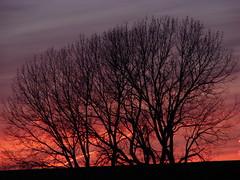 mckinnley sunset 009 (turtlesuit) Tags: winter sunset sky frozenlake