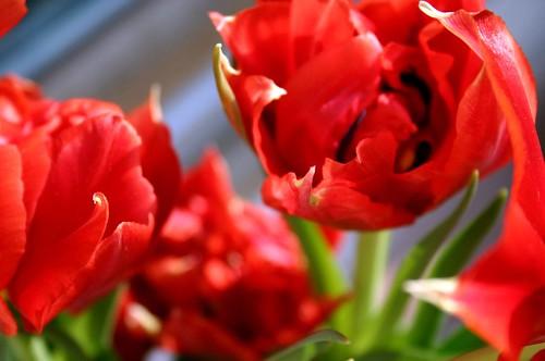 Tulip studies V