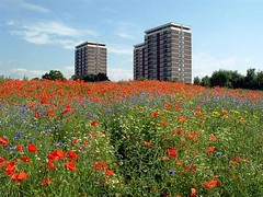 Flowers and Towers (Mr Grimesdale) Tags: towers flats wildflowers knowsley merseyside kirkby poppys capitalofculture poppyfield mrgrimsdale stevewallace capitalofculture2008 liverpoolcapitalofculture2008 europeancapitalofculture2008 quarrygreen photofaceoffwinner liverpoolcapitalofculture pfogold mrgrimesdale grimesdale