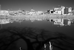 GodAndScience... (brnpttmn) Tags: shadow reflection tree water minnesota river mississippi god science mississippiriver infrared d200 saintpaul r72 sciencemuseumofminnesota alr saintpaulcathedral hoyar72 20mmf28d tc101