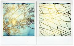 branches_lines (Cea tecea) Tags: polaroid sx70 diptych pair expired dptico