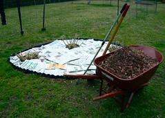 Hibiscus Bed