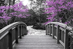 The Bridge to Spring - Part 2 (WisDoc) Tags: bridge wisconsin canon cutout spring bravo purple madison botanicalgardens selectivecolor olbrich selectivecoloring wisdoc spselection diamondclassphotographer