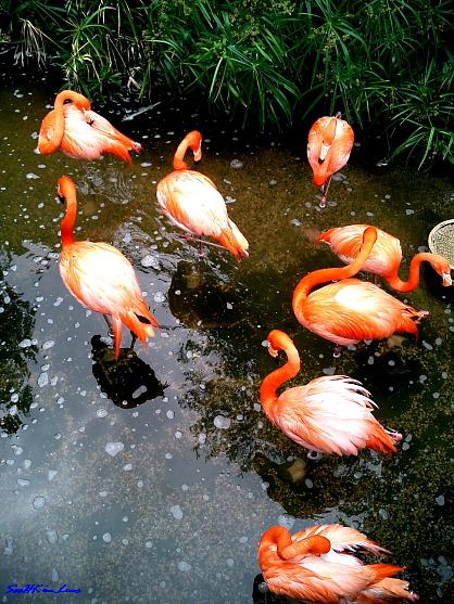Lovely bird @ Langkawi Malaysia